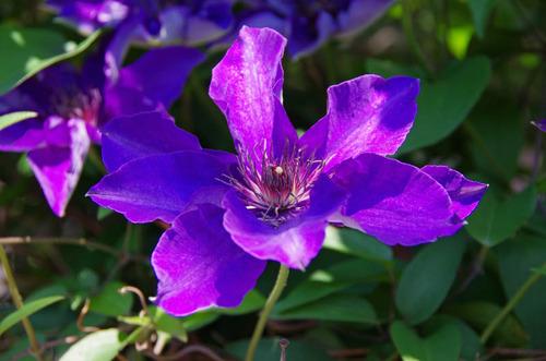 散歩道の花(5月)2012-3