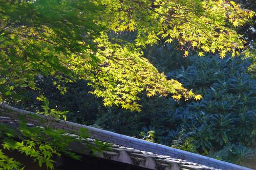 京王百草園201110-4