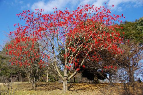 昭和記念公園201112-5