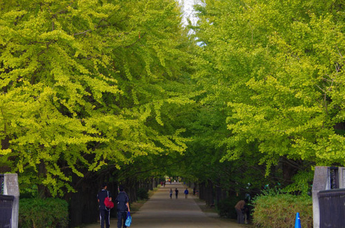 昭和記念公園201211-11
