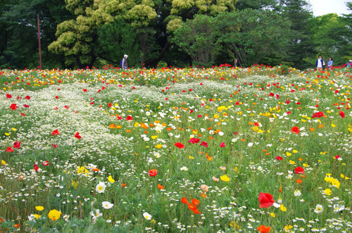昭和記念公園201405-4