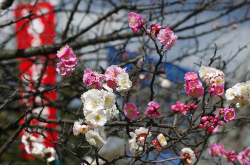 高幡不動尊201203-12