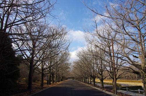 昭和記念公園201212-1