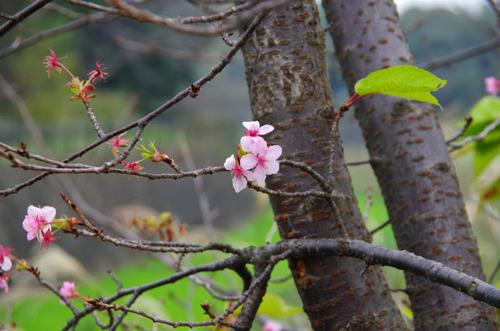 昭和記念公園201111-9