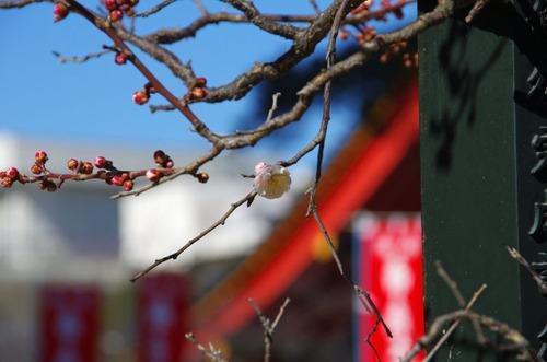 高幡不動尊20110213-6