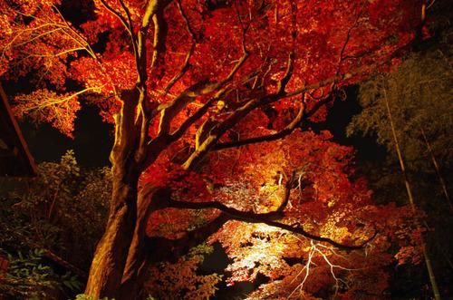京王百草園201111-12