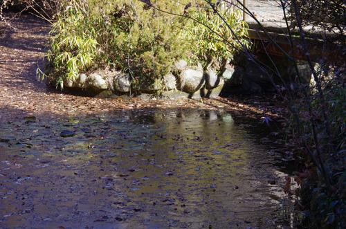 京王百草園201201-7