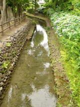 親水緑地8