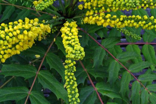 散歩道の花200912-チャリティー8