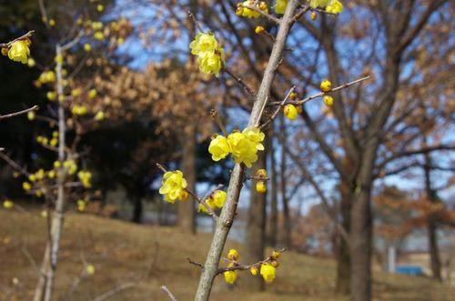 昭和記念公園201101-8