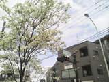 高幡不動0419-3