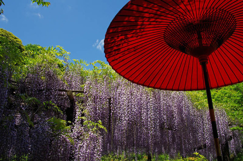 京王百草園201305-8