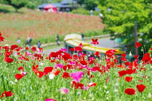 昭和記念公園201205-10