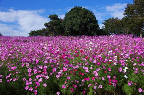 昭和記念公園201211-7