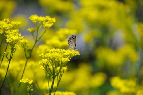 散歩道の花8月2012-1