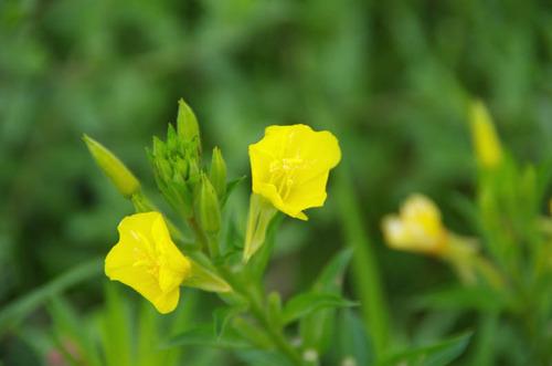 河川敷の花201207-8