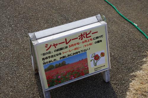 昭和記念公園201401-9