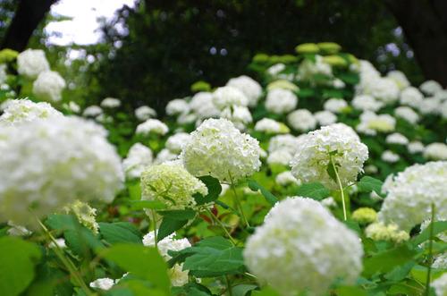 昭和記念公園201306-6