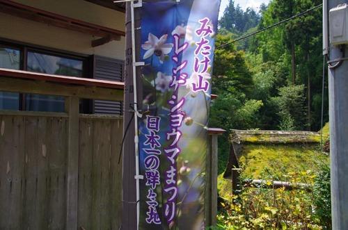 御岳山レンゲショウマ201208-9
