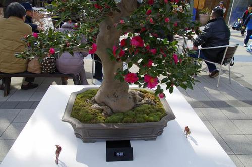 昭和記念公園201302-10