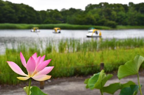 昭和記念公園201606-11