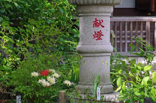 高幡不動201209-5