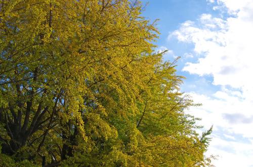 昭和記念公園201411-11
