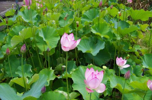 昭和記念公園201207-2