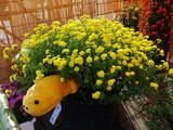 菊まつり飾り-12