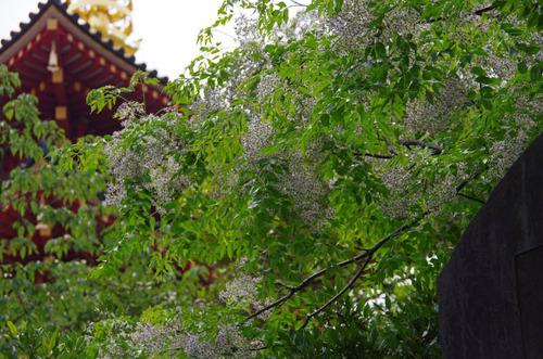 高幡不動201206-4