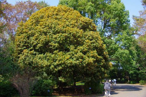 昭和記念公園201110-2