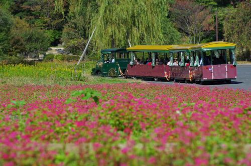 昭和記念公園201411-7