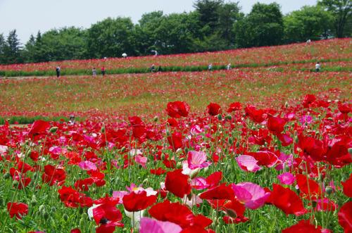 昭和記念公園201105-4