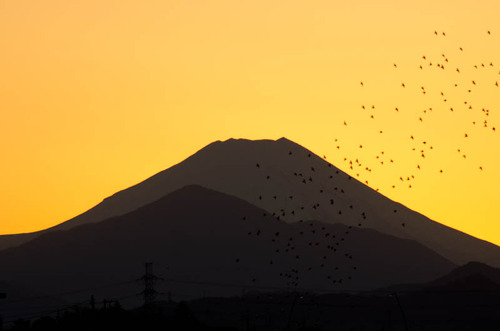 浅川河川敷201112-10