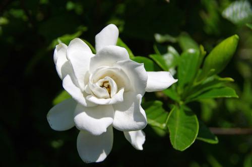 散歩道の花201107-9