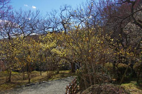 京王百草園201101-2