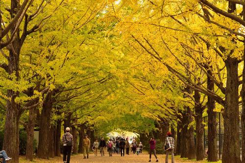 昭和記念公園201511-5