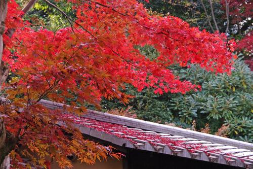 京王百草園201110-15