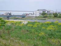 浅川の河川敷