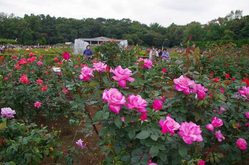 神代植物園2011-12