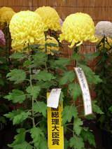 菊まつり受賞-6