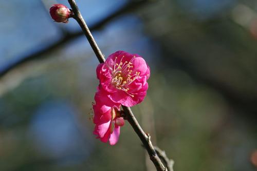 百草園20101219-1