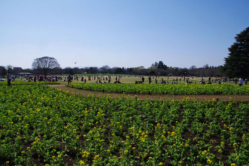 昭和記念公園20100314-24