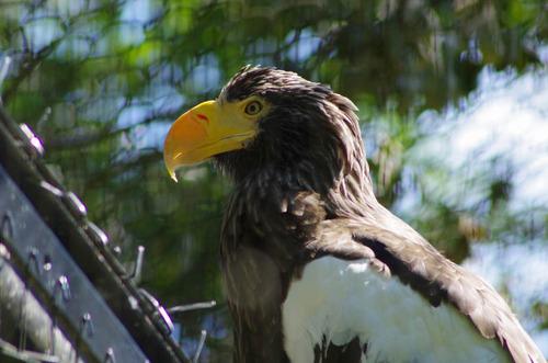 多摩動物公園201109-8