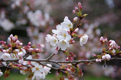昭和記念公園201204-6