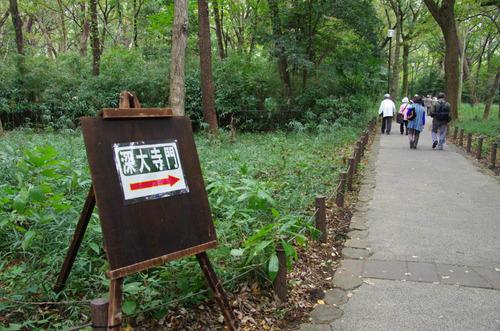 神代植物園2011-14