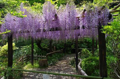 百草園201105-4