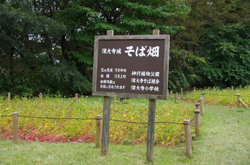 深大寺201110-12