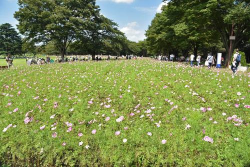 昭和記念公園201509-1