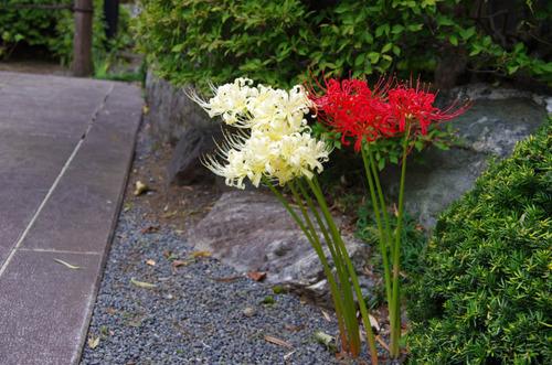 高幡不動201110-7